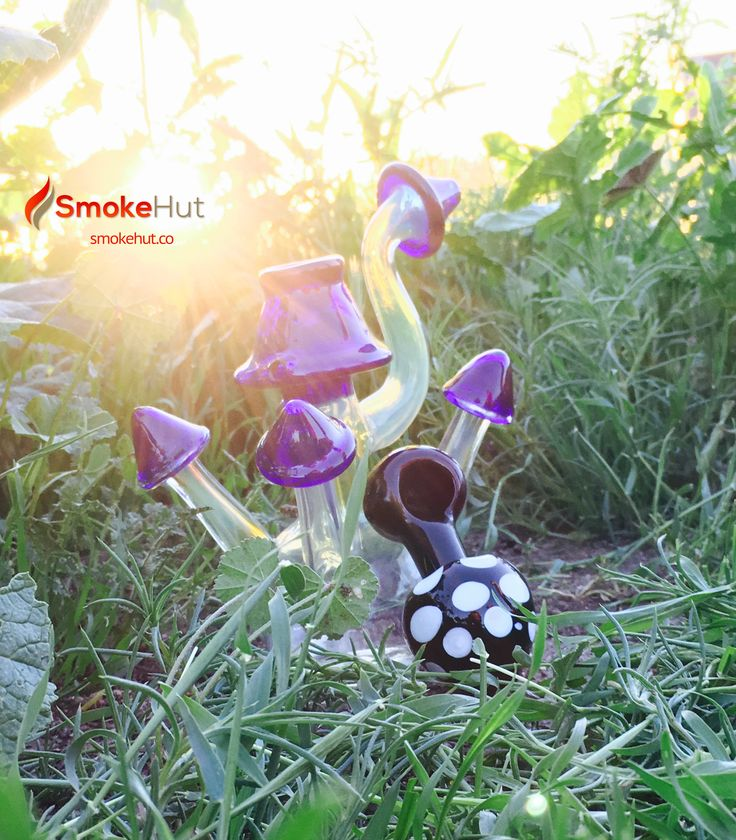 Mushroom Bubbler and Pipe. Cheap glass bongs and pipes. Looking for a unique, trippy, bad ass, crazy, cute, pretty, or girly glass bong, water pipe, bubbler, dab rig, or oil rig? www.smokehut.co #smokehut