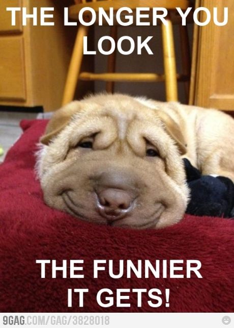 silly, smiley dog