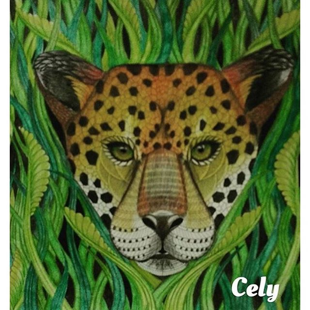 Colouring Coloring Books Adult Pencil Art Animal Kingdom Jungle Animals Tigers Tropical Sketches