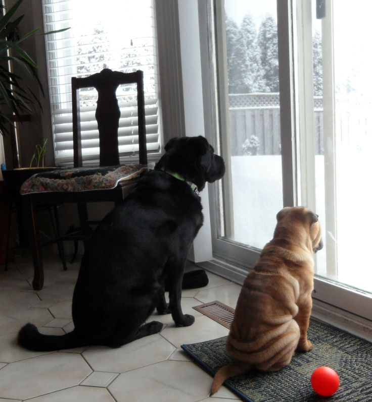 Zoey & Oliver waiting patiently.