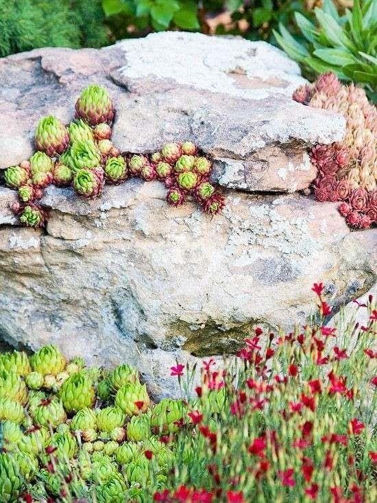 Come creare un giardino roccioso  (Foto 28/40) | Designmag