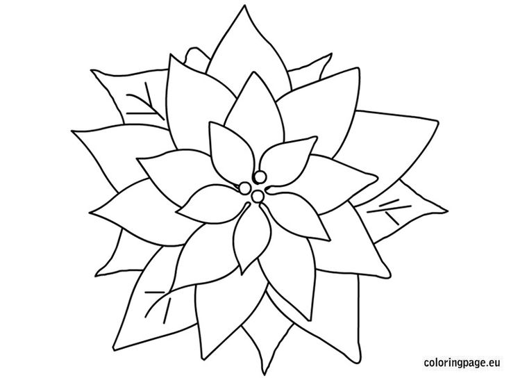 coloring pages of christmas flowers - photo#13