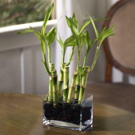 más de 25 bellas ideas sobre macetas para orquideas en pinterest