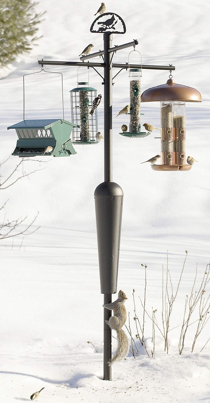 Duncraft.com: Best Selling Squirrel Proof Squirrel Stopper System Pole -- what's not to love?