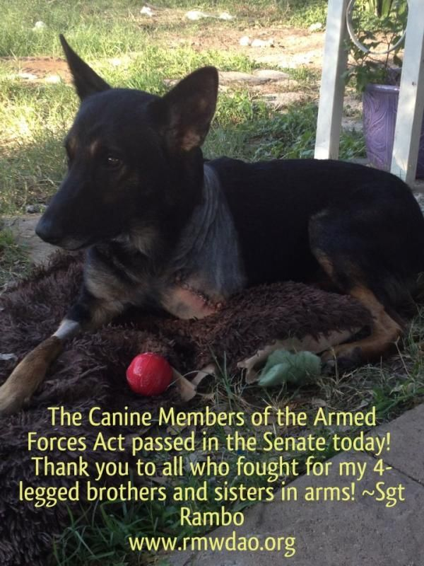 Canine Members of the Armed Forces Act Passes Senate Today, Help for Military Working Dogs Coming