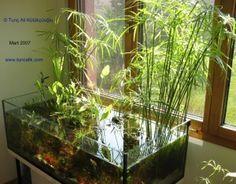 Partially-submerged plants:  Golden pothos (Epipremnum pinnatum, syn. Scindapsus aureus)  Umbrella papyrus (Cyperus alternifolius)  Climbing fig (Ficus pumila)  Split-leaf Philodendron (Monstera deliciosa)  Lucky bamboo (Dracaena sanderiana)  Syngonium species