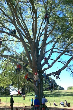 Tree climbing school!