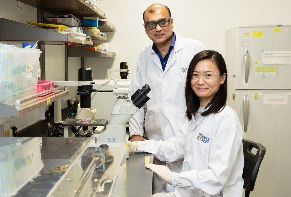 Consumption of a bioactive compound from Neem plant could significantly suppress development of prostate cancer -- ScienceDaily