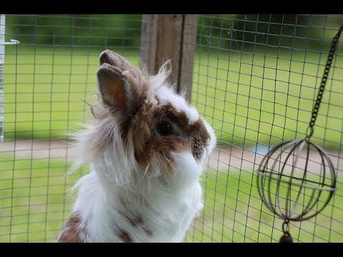 Happy Bunny Rabbit Binky, Hopping, Jumping For Joy - Funny - YouTube