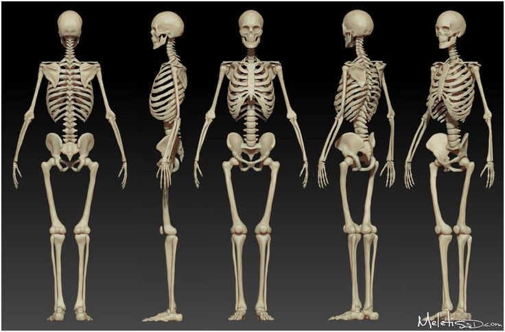 The human skeleton is the internal framework of the body. Description from pixgood.com. I searched for this on bing.com/images
