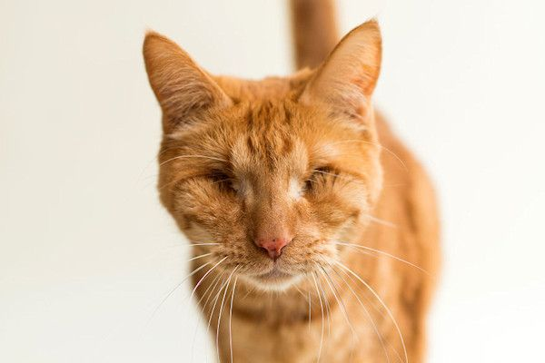 """Als je op zoek bent naar een nieuw huisdier, gaat je voorkeur waarschijnlijk niet uit naar een blinde kat. Daardoor zitten blinde katten vaak de rest van hun leven in het asiel. Kattenfotografe Casey Christopher trok zich het lot van de beestjes aan. Met prachtige foto's probeert ze een nieuw thuis voor hen te vinden. """"Ik vind dat alle katten [...]"""