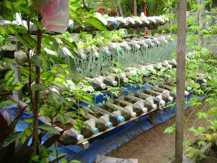 Recycled plastic milk juice bottle veggie garden - Plastic bottles for gardening ...