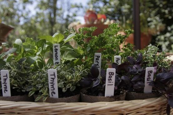 Miracle-Gro-Gardenista-Herbs