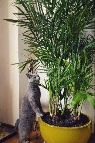 Bamboo Palm (Chamaedorea seifrizii) | 15 Beautiful House Plants That Can Actually Purify Your Home