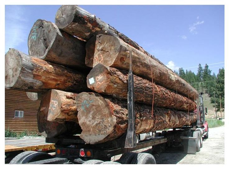 Load of large trees going into our mill