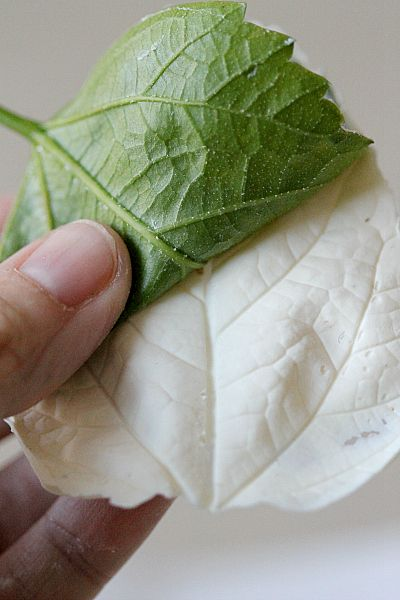 How to make chocolate leaves for decorating cupcakes and cakes. I love this idea!