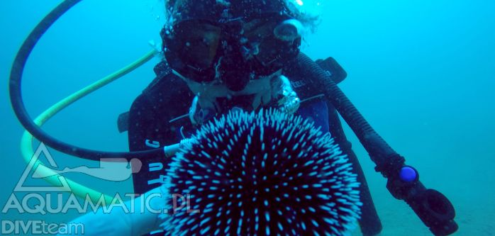 Widziałeś już jakie cuda można znaleźć pod wodą w Chorwacji? Zobacz koniecznie blog Bazy Nurkowej w Chorwacji i zobacz najnowsze zdjęcia z podróży: http://www.divingpag.com/pl/index.php/aktualnosci/22-udany-urlop-dobra-pogoda-nurkowania