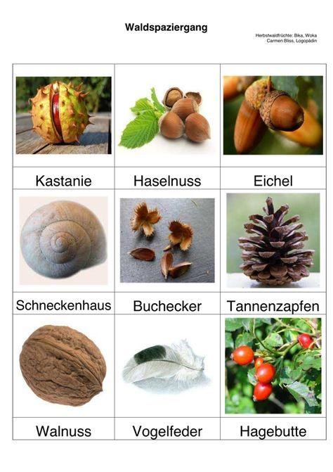 Bildkarten: Herbstliches – Sprache – Ellen Falkenberg