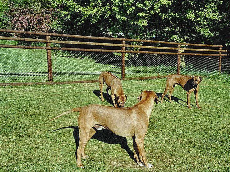 Hundezaun mit braunen Halbrundlatten und Diagonalgeflecht