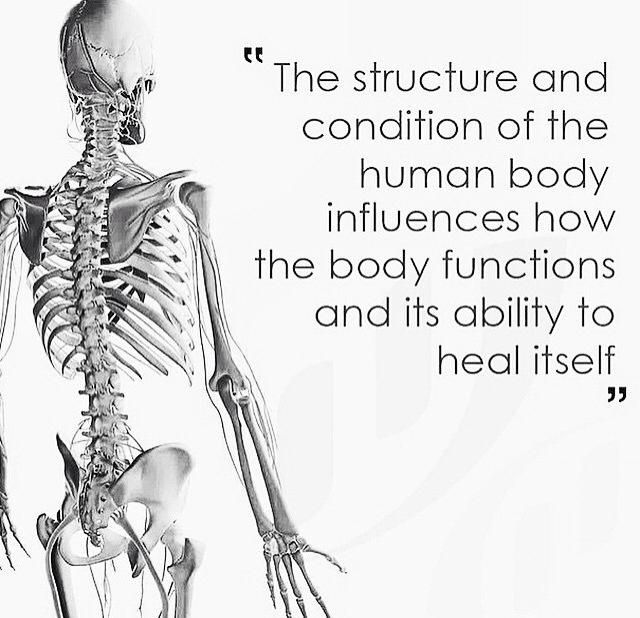 pin by leslie hewitt on anatomy power