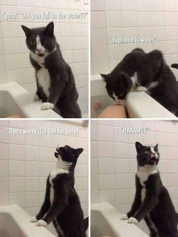 This cat who is genuinely worried about you.   25 Pictures That Are Way, Way…