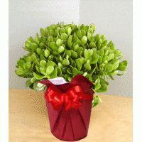 Order plants online in noida,Plant nurseries in hyderabad,Buy plants in bangalore,Plant nurseries in bangalore