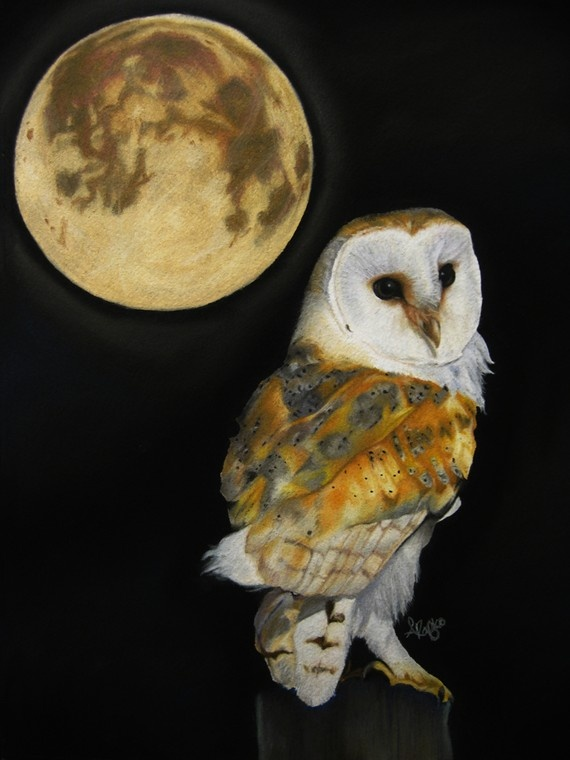 Beneath The Moon Pastel Drawing Barn Owl Wildlife Bird Fine By Autumnlaneartistry