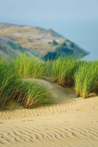 Dunes along the Baltic Sea, Lithuania