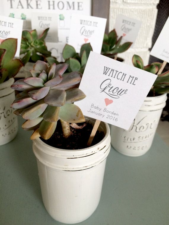 These chic little tags will add lots of love to your baby shower succulent favors!   (Let Love Grow tags shown to show different shapes - square with hole, rectangular with hole, and square on stick)   {TAG}  THREE OPTIONS:  2x2 square tags, with hole punch in the left corner  2.25X1.5 tags with scalloped edge  2x2 square tags on stick (Twine NOT included - contact me if youd like twine added to the order)  1/8 hole punched at top of each tag Printed on OFF-WHITE card stock (other colors...