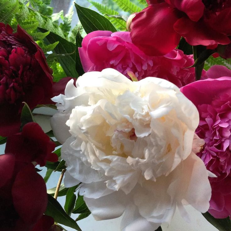 Пришло лето и радует нас теплом солнцем цветами и ягодами. Я не покупаю срезанные цветы так как считаю что они должны нас радовать в своей среде. Этот букет подарила мне сестра в день моего приезда в Кировоград. И я ей благодарна потому что целую неделю наслаждалась ароматом и видом цветов которые украсили мою комнату.  #цветы #пионы #букет  #лето #квіти #flowers #flowerstagram #summer #summertime