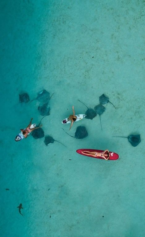 Surfer girls and stingrays