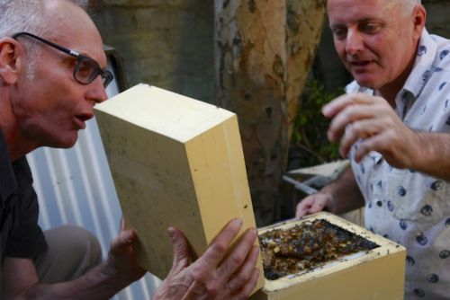 Tim Heard + Michael Mobbs splitting a hive - Keeping Stingless Bees in the City
