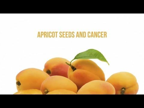 Apricot Seeds And Cancer - WATCH THE VIDEO.    *** apricot seeds prevent cancer ***   Apricot Seeds And Cancer  How are apricot seeds and cancer prevention related? Are apricot seeds effective in helping people dealing with cancer heal from it? The Hunza peoples diet includes apricot seeds as a consistent part of their diet. What is quite...