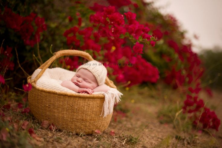 newborn outside with red flowers.