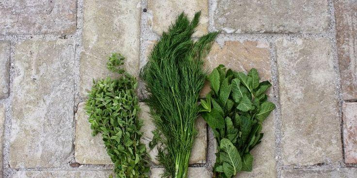 URTESMØR MED VARIATIONER - Butter with herbs