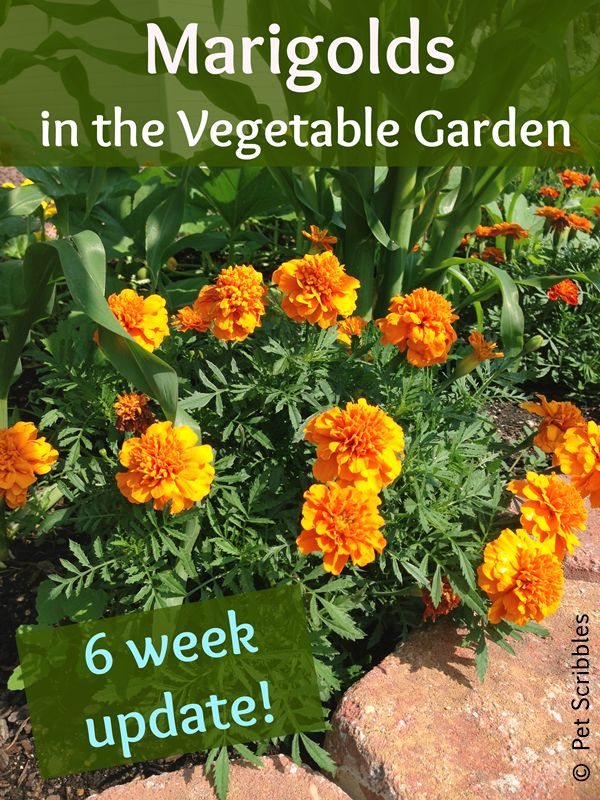 1000 Images About Survival Garden Victory Garden Vegetable Garden On Pinterest Gardens