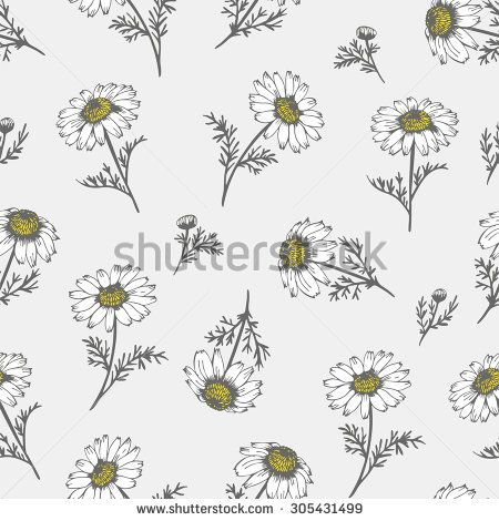 Camomile hand drawn background, vector flowers
