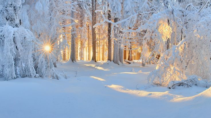 Download hd wallpapers of 265058-sunrise, Winter, Nature, Forest, Snow, Landscape, Trees, Sun Rays, White, Cold, Sunlight, Frost. Free download High Qualit