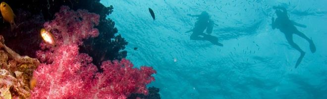 Experience Similan's National Park with Raya Divers