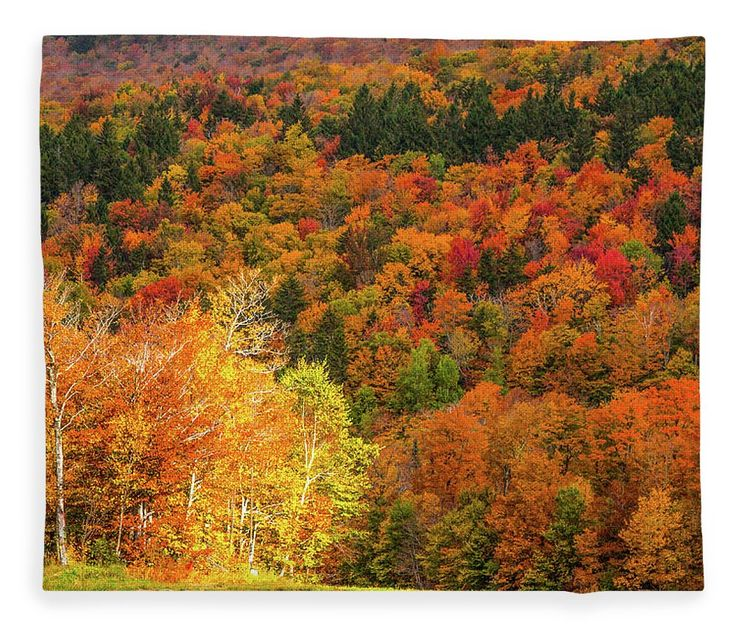 Autumn Foliage New England Fleece Blanket featuring the photograph Sun Peeking Through by Jeff Folger