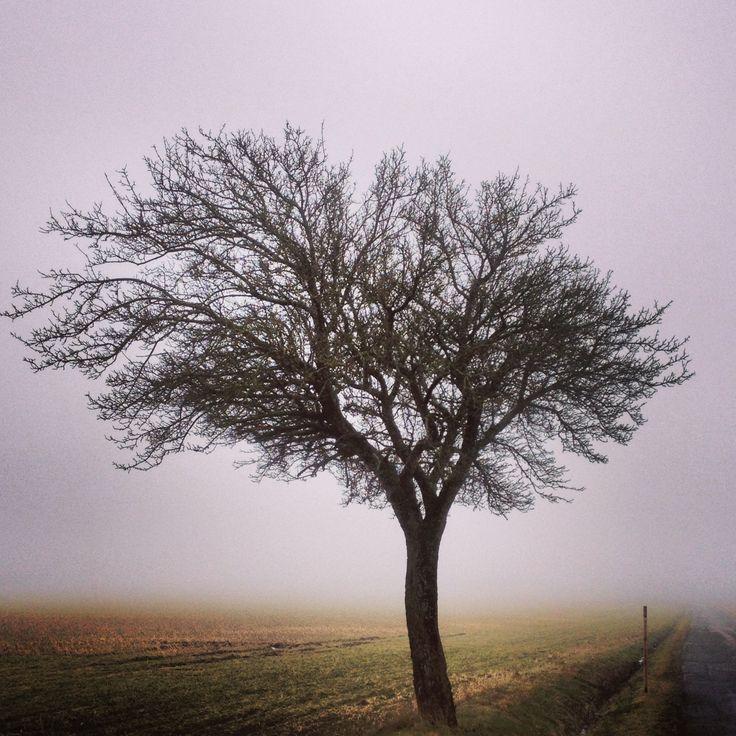 Træ i tåge ved Vestermarie.