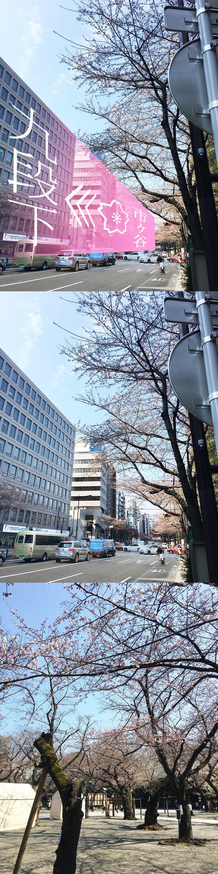 【編集者M】編集長が面白い 桜の傾向に気が付きました靖国通りの桜は市ヶ谷から九段下に向かって、徐々に咲いていっているみたい!?とのことです。どうなんでしょうか⁉本当だとしたら、なんだかファンタジックですね~✨✨✨靖国神社の桜はまだまだの様子でした