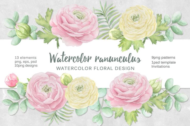 Watercolor ranunculus. by Natali_art on @creativemarket