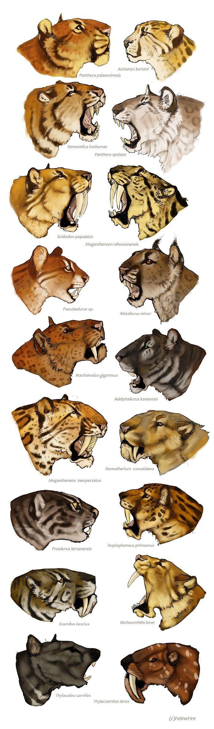 Panthera, Acinonyx, Xenosmilus, Smilodon, Megantereon, Pseudaelurus, Metailurus, Machairodus, Adelphailurus, Homotherium, Proailurus, Hoplophoneus, Eusmilus, Barbourofelis, Thylacoleo, Thylascomilus
