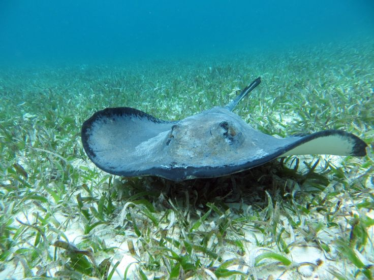 Stingray - they are friendly and don't sting