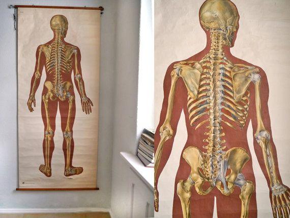 Vintage Pull Down Map Anatomy Human Skeleton Pull Down