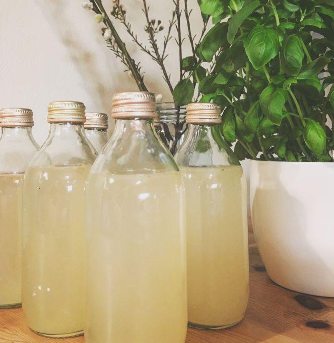 Fermented ginger beer • Fermentert ingefærøl
