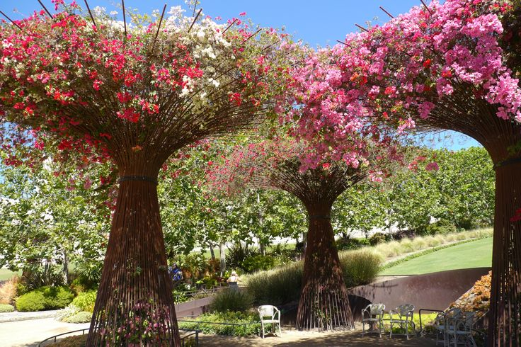 Bougainvillea Google Search Gardens Pinterest