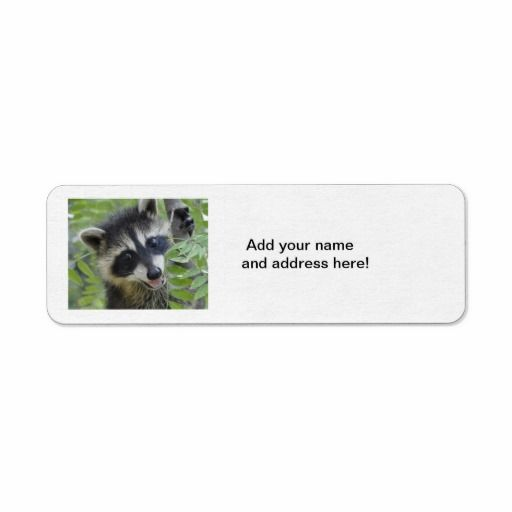 =>>Cheap          	Raccoon Return Address Labels           	Raccoon Return Address Labels In our offer link above you will seeDiscount Deals          	Raccoon Return Address Labels Online Secure Check out Quick and Easy...Cleck Hot Deals >>> http://www.zazzle.com/raccoon_return_address_labels-106571595751895919?rf=238627982471231924&zbar=1&tc=terrest