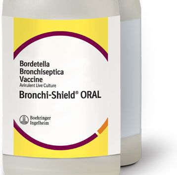Bronchi-Shield ORAL - Boehringer Ingelheim - Visit dvm360.com/FearFree to learn more about Fear-Free veterinary visits